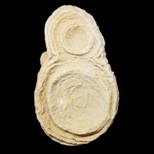 stromatolithe-concretion-maroc