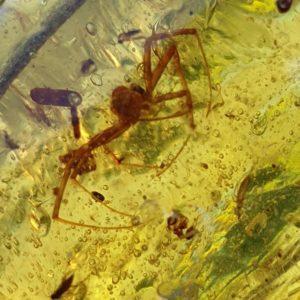 Copal-ambre-resine-fossile-madagascar-insecte-inclusion-araignee-mineraux